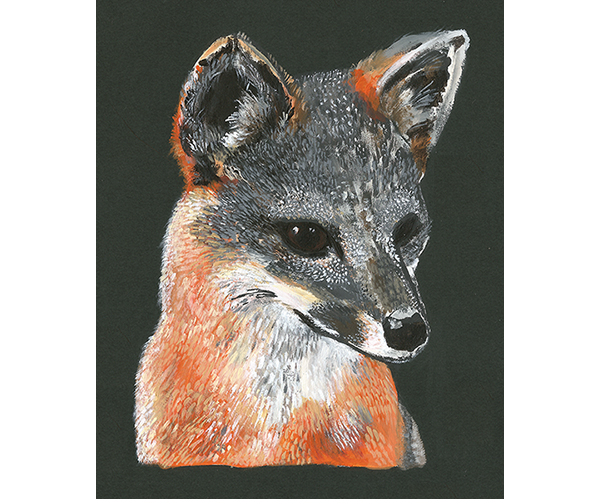 Santa Cruz Island Fox Painting