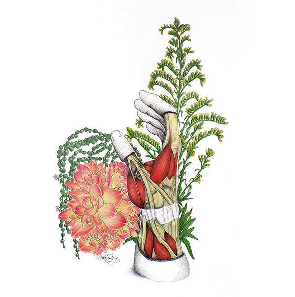 Scientific Illustration of Hand Anatomy and Succulents